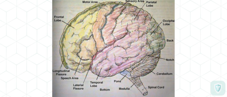Напряжение твердой мозговой оболочки