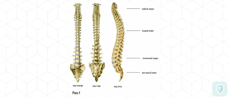 Патоморфология гриппозных церебральных и спинальных арахноидитов