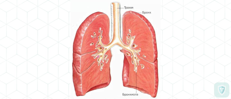 Бронхит, плеврит, пневмония