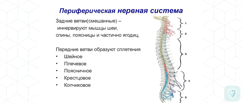 Различные токсические поражения периферической нервной системы