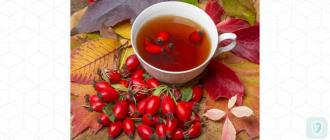 Шиповник: море витаминов в маленькой ягодке
