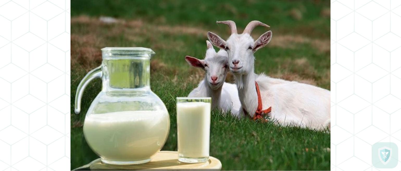 Козье молоко для крепкого здоровья. Почему его употребление целесообразно?