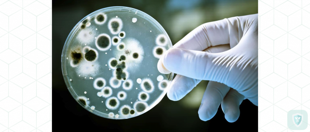 Холера: симптомы, лечение и профилактика